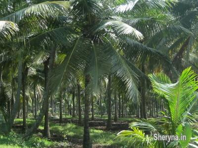 Farm house for sale @ low rate @5lakhs per acre | Land/Plots | Sheryna in